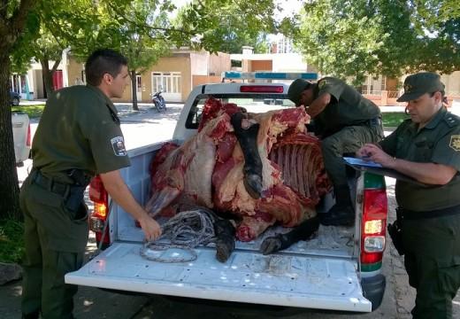 Las Parejas. Secuestran casi 900 kilos de carne no apta para consumo humano.