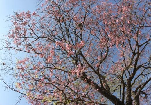 El Municipio plantará un árbol por cada niño que nazca en la ciudad.