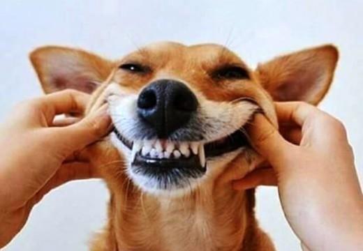 A cara de perro: Marcha para decir basta a la pirotecnia.