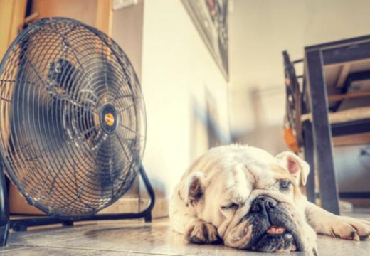 Hoy… mucho ventilador y a estarse quieto.