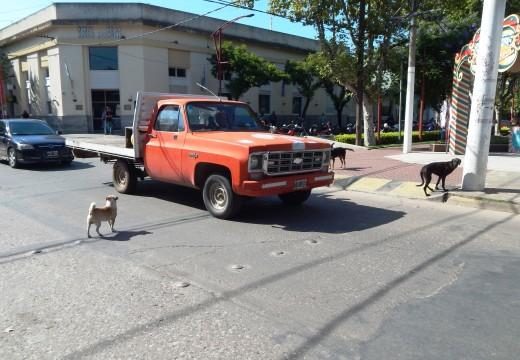 Cañada de Gómez. El problema de los perros sueltos en la calle sigue sin solución.