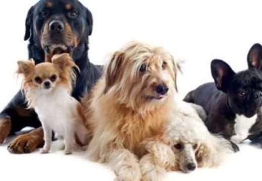 Charla sobre prevención de agresiones caninas, maltrato animal, y problemática del perro en situación de calle.