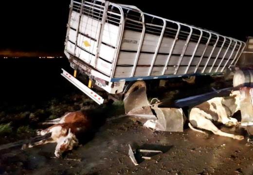 Armstrong. Tumbo un camión cargado de animales.