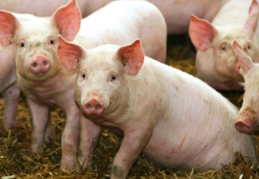 Diputado quiere prohibir en Santa Fe la venta de cerdo y derivados de EEUU.