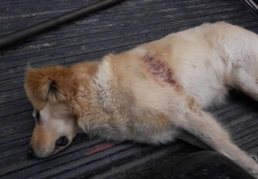 Armstrong. Mataron de un tiro a un perro.