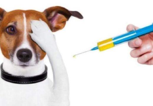 Hoy culmina campaña de vacunación antirrábica gratuita.