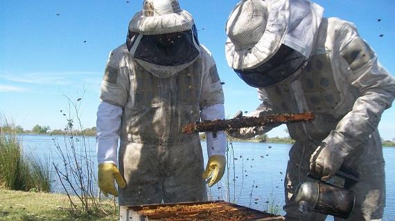 Santa Fe se consolida como la segunda provincia que más miel orgánica produce.